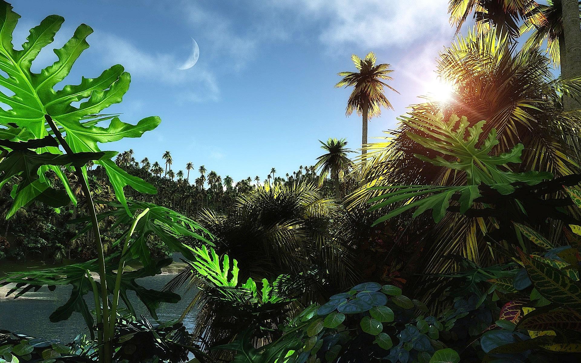 jungle trekking essay